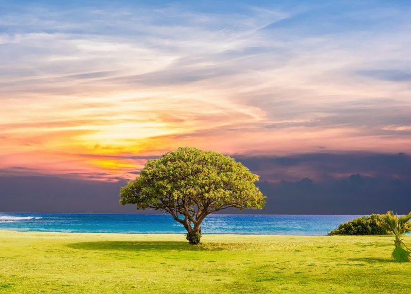 cropped-tree-2435269_1280.jpg