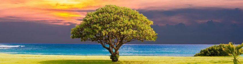 cropped-tree-2435269_12801.jpg