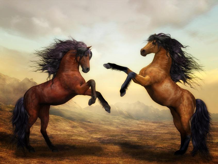 horses-2904536_1280